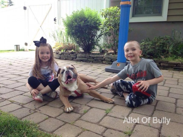 bulldogs great family dogs